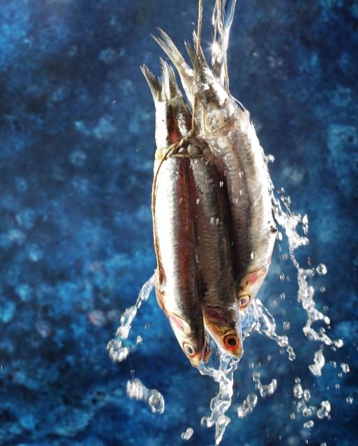 Pescao